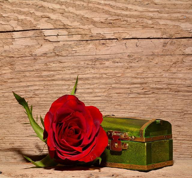 rose-557694_640